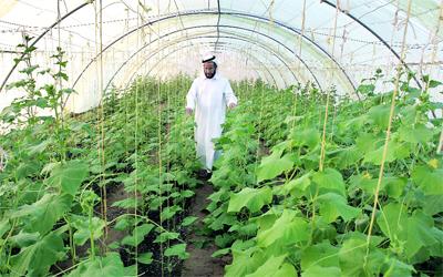 http://media.emaratalyoum.com/inline-images/353660.jpg